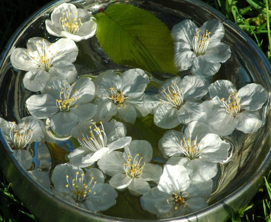 The flowers are infused in sunlight