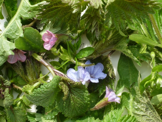 Balm, Chickweed, Dandelion, Nettle, Wild Strawberry, Blackcurrant and Lungwort make a fabulous spring tea.