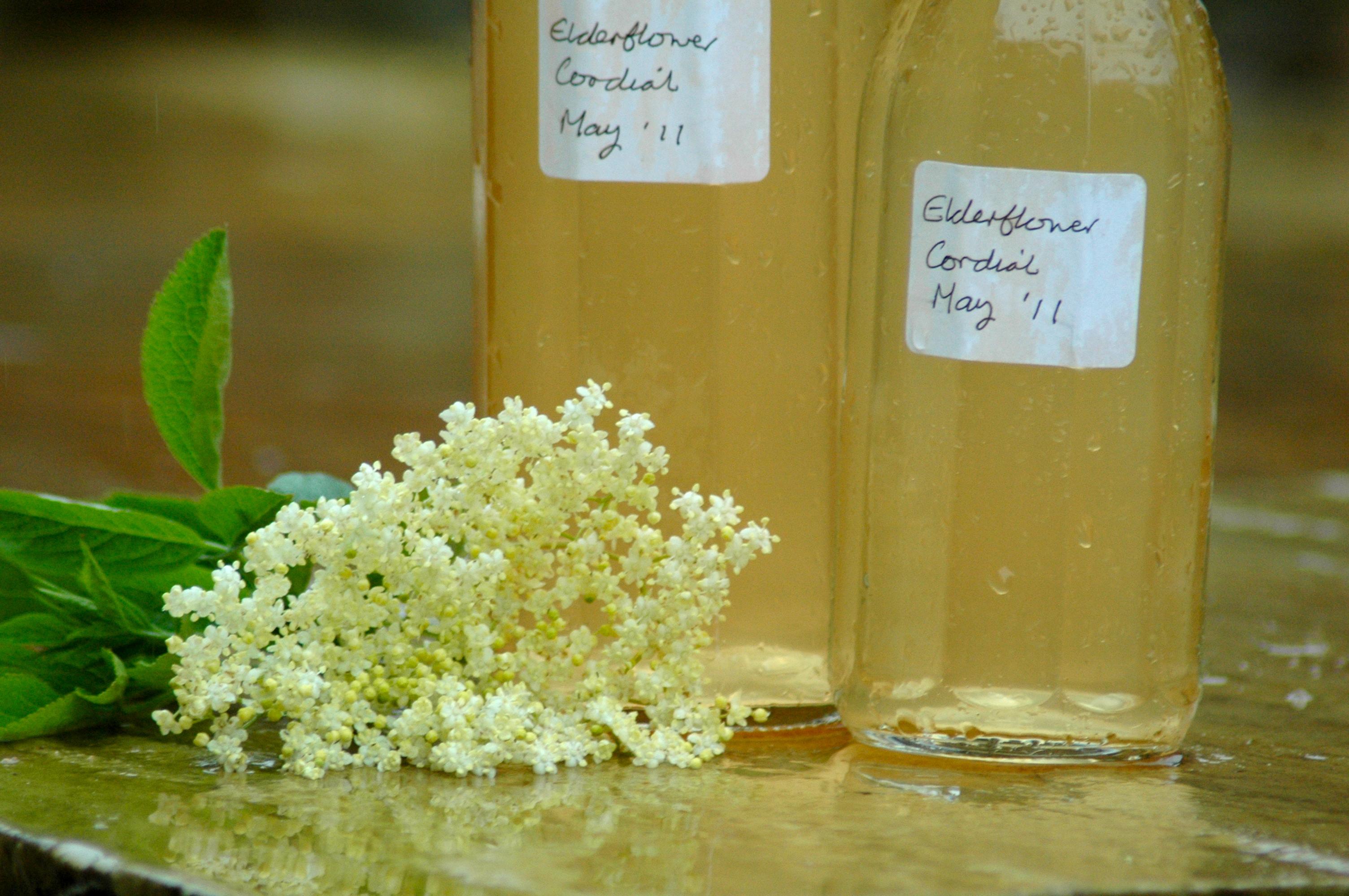 recipes: elderflower cordial, elderflower tea | suzanne askham