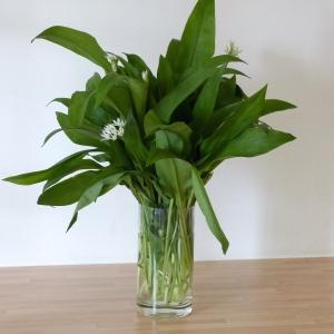 Vase of garlic