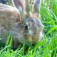 A young hare's guide to peace